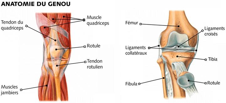Conseils pour la pratique du yoga avec un genou fragile for Douleur interieur du pied